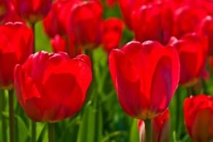 133- Astenia primaveral - Sonia Yubero_ 18290426_s