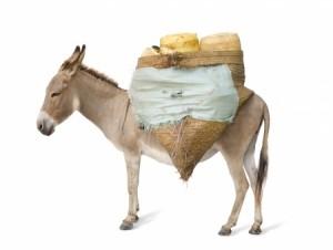 158-El campesino el hijo y el burro_Maria Teresa_2659258_s
